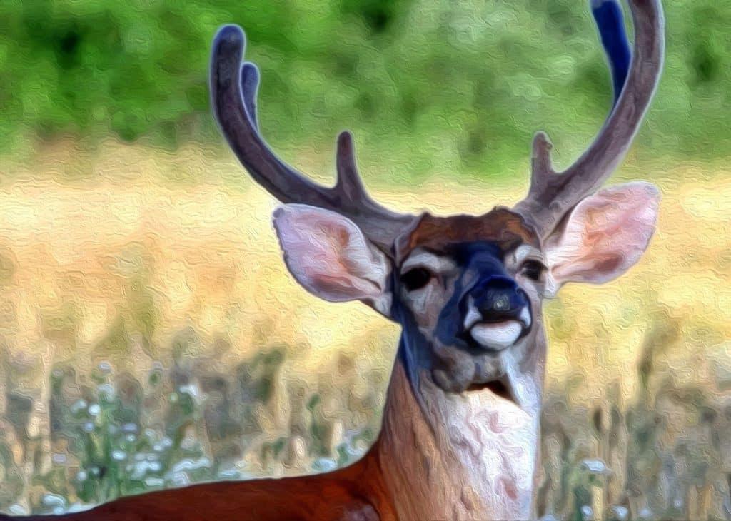 7a8b91a784c15 How To Hunt Early Season Deer in Hot Weather - RangetoReel